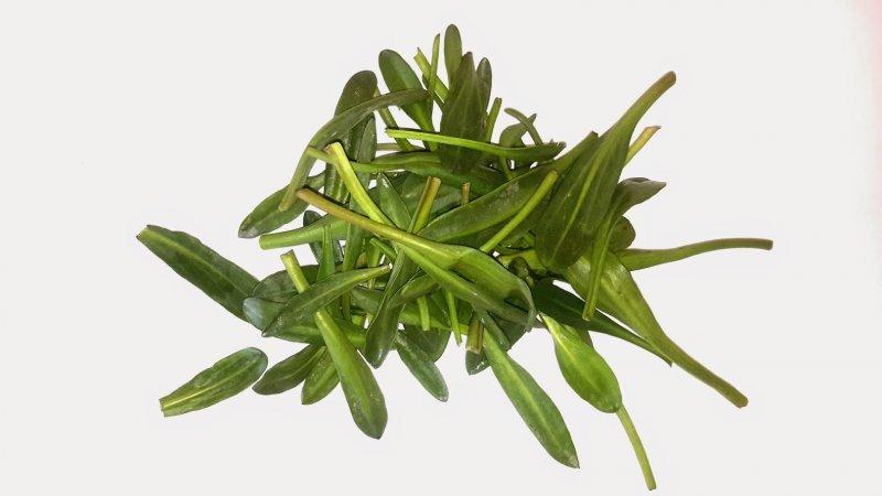 Lamsoor (100 gram)