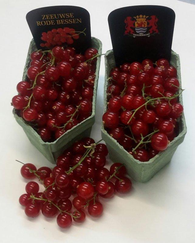 Rode bessen (kleine doos)