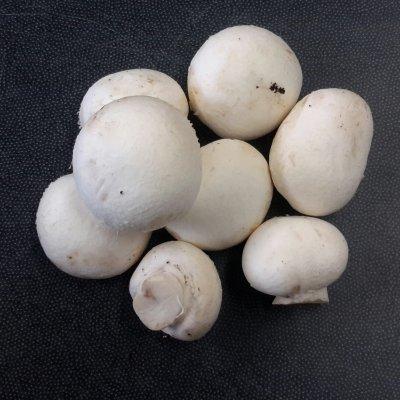 Witte champignons (200 gram)