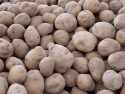Aardappel Eigenheimers