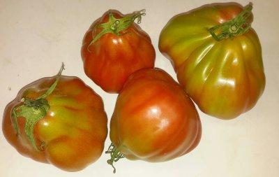 Coeur de Boeuf tomaten (500 gram)